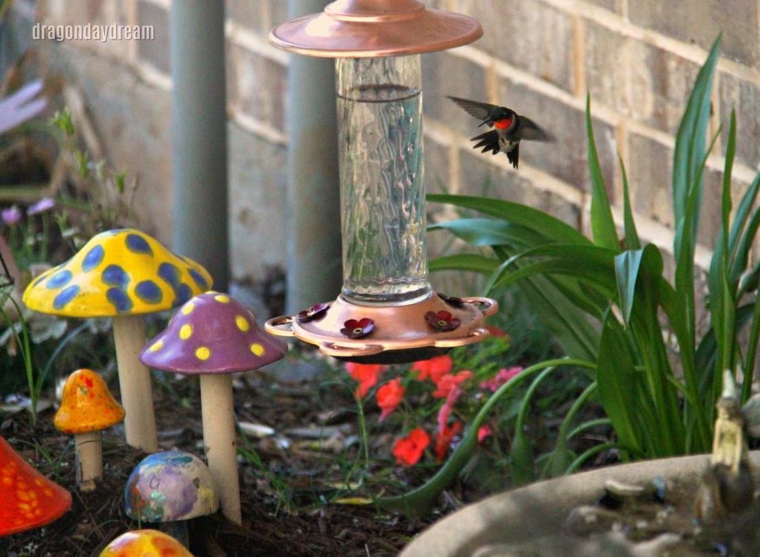 2018-05-02 hummingbird1
