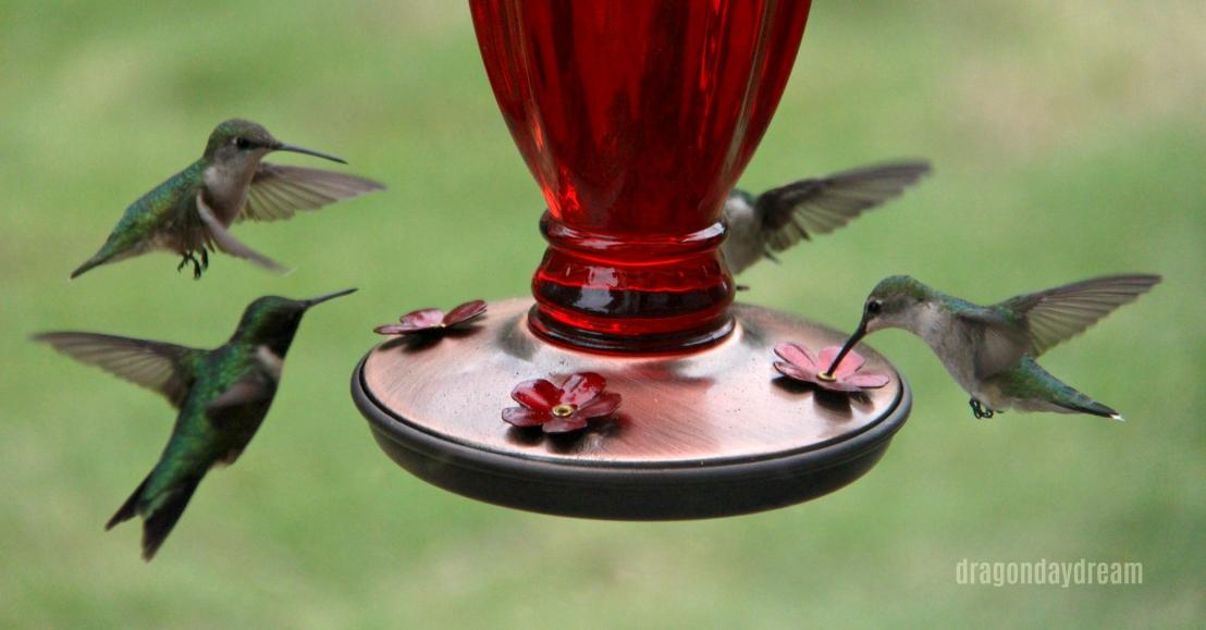 2018-05-02 hummingbird2