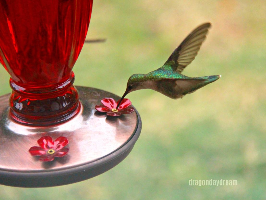 2018-05-02 hummingbird4